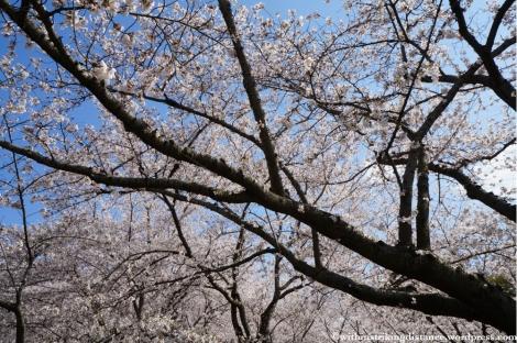 03Apr13 Okayama 007