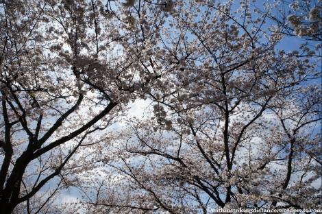 03Apr13 Okayama 008