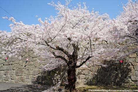 05Apr13 Tsuyama 005