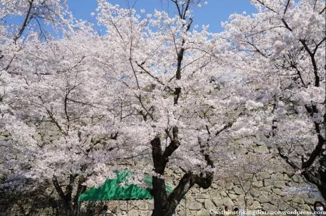 05Apr13 Tsuyama 009
