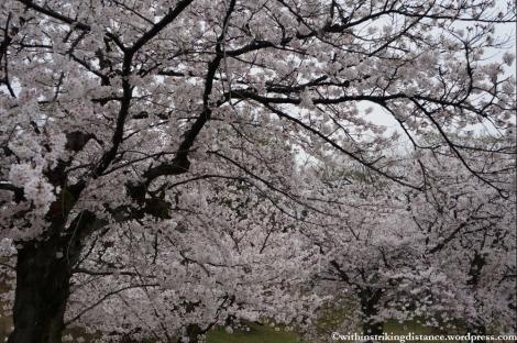 Trip Report 02Apr13 Kurashiki Himeji 012