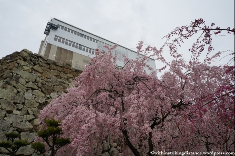 Trip Report 02Apr13 Kurashiki Himeji 014