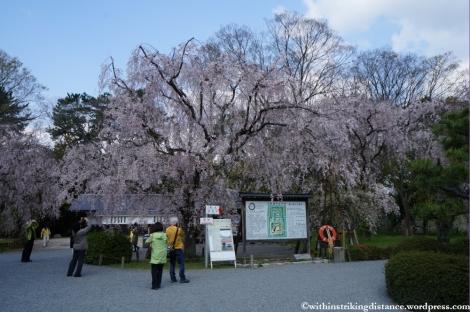 11Apr13 Kyoto Part 1 038