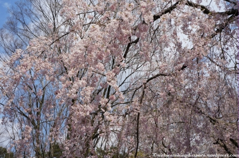 11Apr13 Kyoto Part 1 040