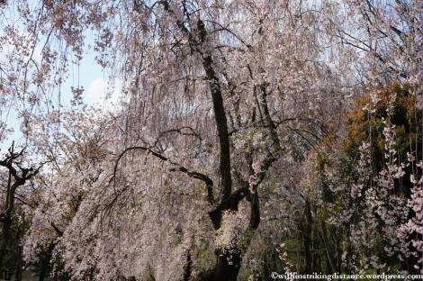 11Apr13 Kyoto Part 1 041