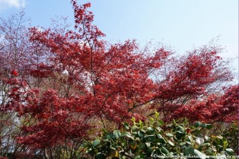 11Apr13 Kyoto Part 1 043