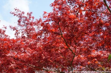 11Apr13 Kyoto Part 1 045