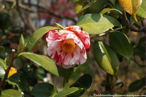 11Apr13 Kyoto Part 1 046