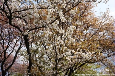 11Apr13 Kyoto Part 1 056