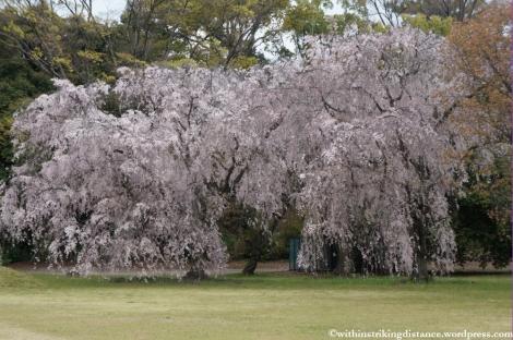 11Apr13 Kyoto Part 1 059