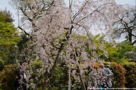 11Apr13 Kyoto Part 3 012