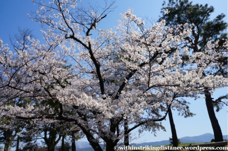 13Apr13 Matsumoto 034