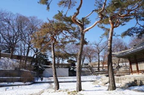 11Feb13 Seoul Changgyeonggung 039