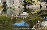 05Feb14 Tokyo Kiyosumi Teien 014