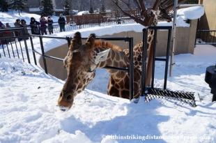 07Feb14 Asahikawa Asahiyama Zoo 010