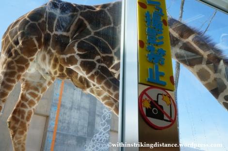 07Feb14 Asahikawa Asahiyama Zoo 013