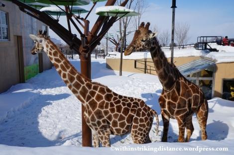 07Feb14 Asahikawa Asahiyama Zoo 015