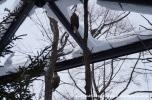 07Feb14 Asahikawa Asahiyama Zoo 032