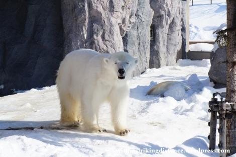 07Feb14 Asahikawa Asahiyama Zoo 045