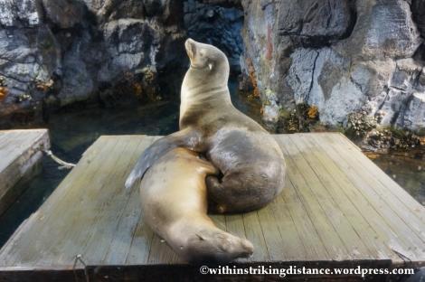 10Feb14 Osaka Aquarium Kaiyukan 005