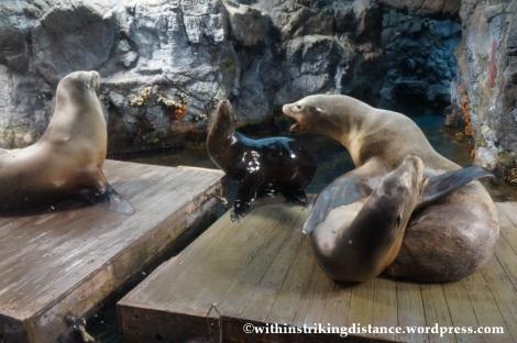 10Feb14 Osaka Aquarium Kaiyukan 006