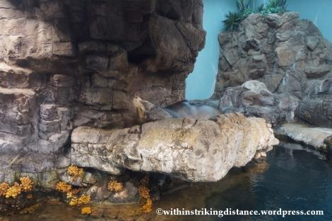 10Feb14 Osaka Aquarium Kaiyukan 007