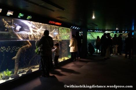 10Feb14 Osaka Aquarium Kaiyukan 010