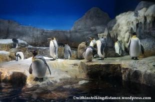 10Feb14 Osaka Aquarium Kaiyukan 011