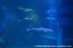 10Feb14 Osaka Aquarium Kaiyukan 015
