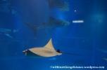 10Feb14 Osaka Aquarium Kaiyukan 016