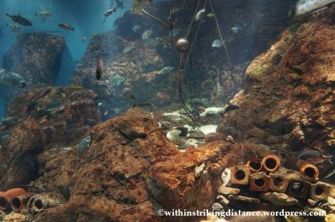 10Feb14 Osaka Aquarium Kaiyukan 017