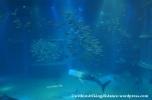 10Feb14 Osaka Aquarium Kaiyukan 019