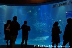 10Feb14 Osaka Aquarium Kaiyukan 020
