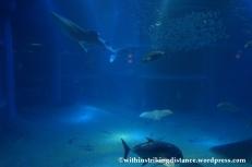 10Feb14 Osaka Aquarium Kaiyukan 021