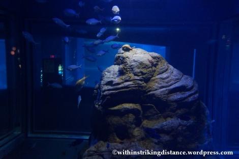 10Feb14 Osaka Aquarium Kaiyukan 022
