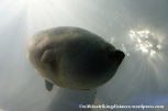 10Feb14 Osaka Aquarium Kaiyukan 024
