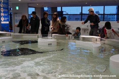 10Feb14 Osaka Aquarium Kaiyukan 027