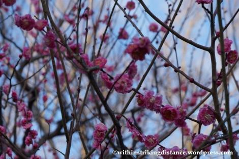 11Feb14 Osaka Japan 031
