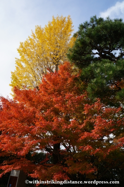 20Nov14 008 Autumn Byodo-in Uji Kyoto Kansai Japan