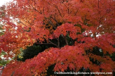 20Nov14 010 Autumn Byodo-in Uji Kyoto Kansai Japan