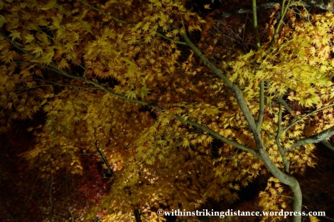 20Nov14 005 Autumn Leaves Eikando Zenrinji Kyoto Kansai Japan