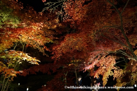 20Nov14 015 Autumn Leaves Eikando Zenrinji Kyoto Kansai Japan