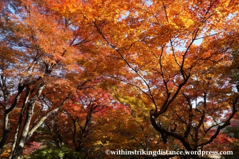 22Nov14 002 Autumn Jojakko-ji Arashiyama Kyoto Kansai Japan
