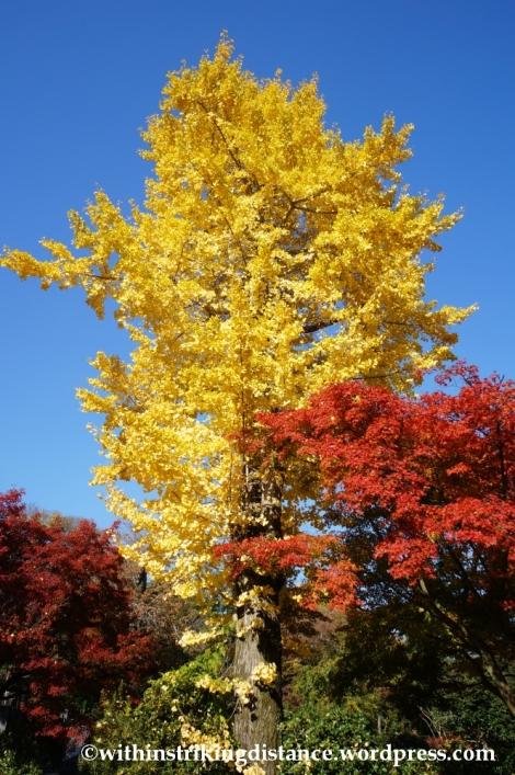 22Nov14 005 Autumn Jojakko-ji Arashiyama Kyoto Kansai Japan