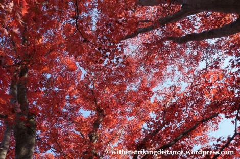 22Nov14 008 Autumn Okochi Sanso Arashiyama Kyoto Kansai Japan