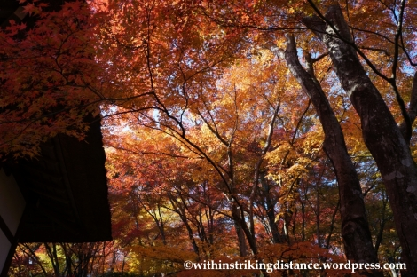 22Nov14 009 Autumn Jojakko-ji Arashiyama Kyoto Kansai Japan