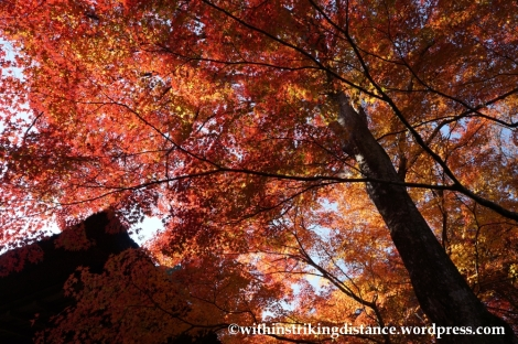 22Nov14 011 Autumn Jojakko-ji Arashiyama Kyoto Kansai Japan
