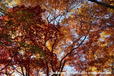 22Nov14 011 Autumn Okochi Sanso Arashiyama Kyoto Kansai Japan