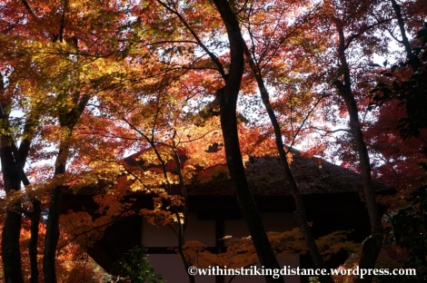 22Nov14 013 Autumn Jojakko-ji Arashiyama Kyoto Kansai Japan