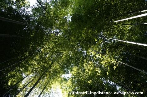 22Nov14 015 Bamboo Grove Tenryu-ji Arashiyama Kyoto Kansai Japan
